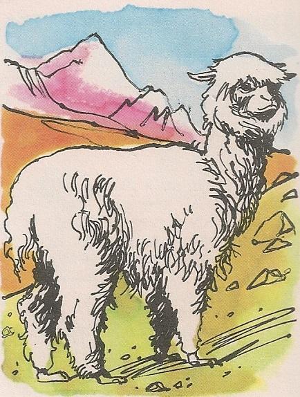 Вунаста алпака