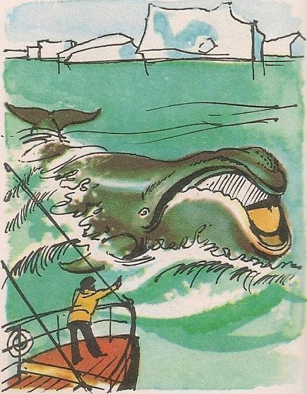Големи кит