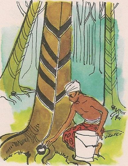 Дрво кау-учу