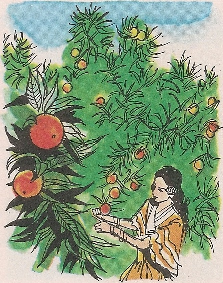 Златна поморанџа