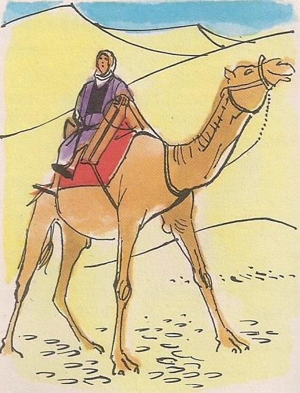 Издржљива камила