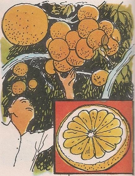 Кисело-горки грепфрут