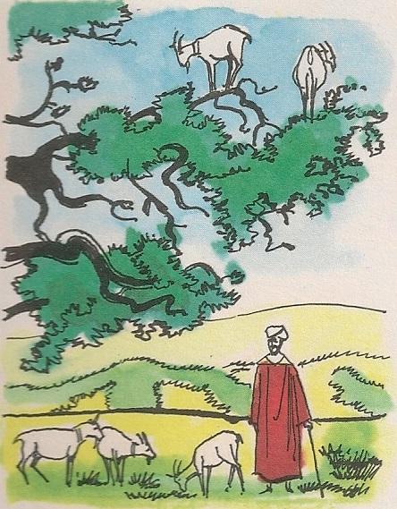 Козје дрво