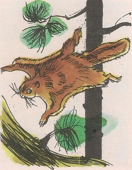 Летећа веверица