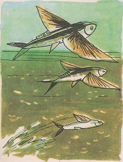 Морска ластавица