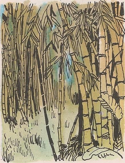 Насушни бамбус