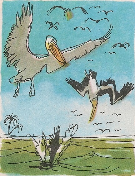 Рибар пеликан