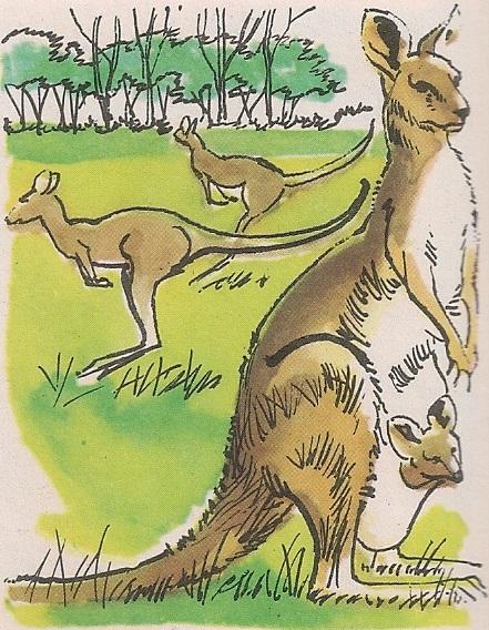 Скакутави кенгури