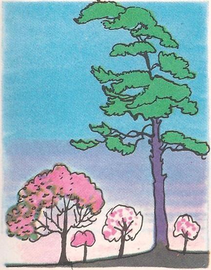 Зашто има дрвећа без цветова?