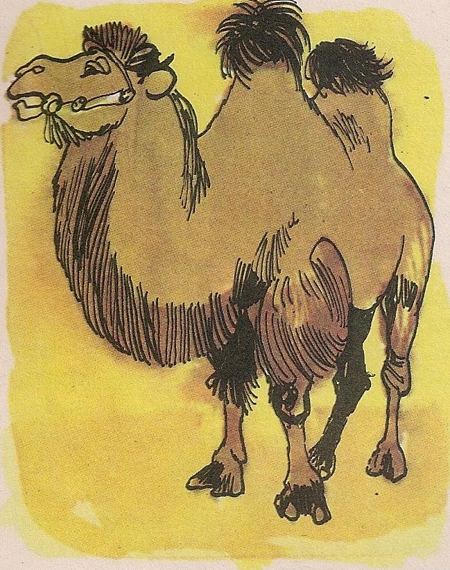 Постоји једногрба и двогрба камила.