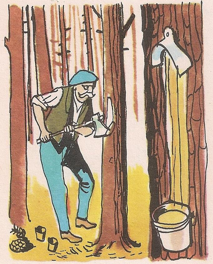 Зашто се неком дрвећу засеца кора?