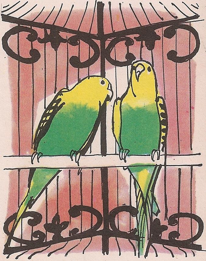 у кавезу увек треба држати по два папагаја: мужјака и женку