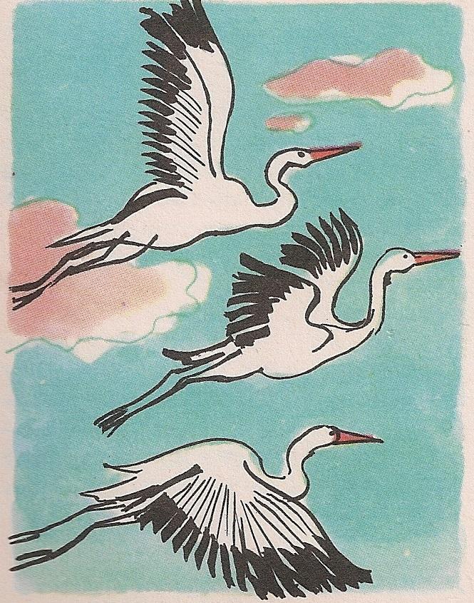 Птица се опире о ваздух брзим и уједначеним покретима крила и на тај начин лети