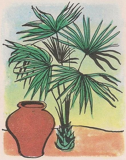 уљана палма