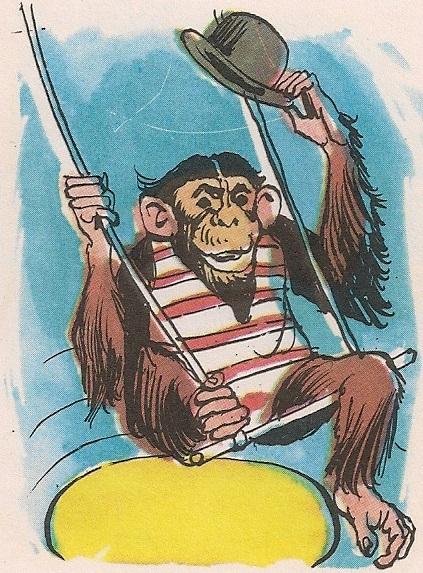 шимпанзо