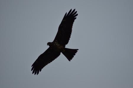 Kako da snimam ptice prema nebu da budem veran njihovoj boji?